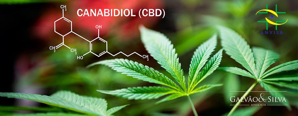 Regularização do canabidiol que é a substância da planta de Cannabis Sativa